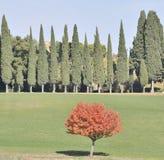 De bomen van de cipres in de Herfst royalty-vrije stock foto