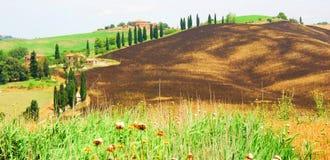 De Bomen van de cipres langs gebied Stock Afbeeldingen