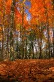 De bomen van de daling Stock Fotografie