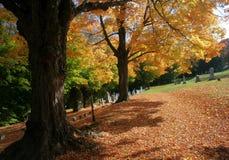 De Bomen van de daling Stock Foto's