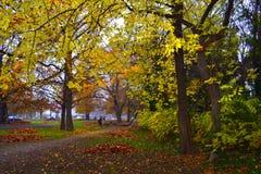 De bomen van de dalingsstad Royalty-vrije Stock Afbeeldingen