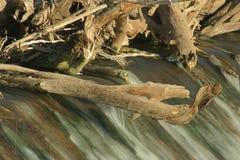 De bomen van de dam Stock Afbeelding