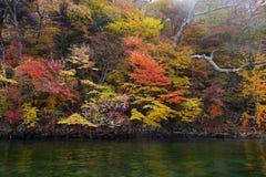 De bomen van de de herfstkleur langs de rivier Stock Afbeeldingen
