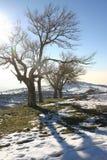 De Bomen van de de winterberg Stock Afbeelding