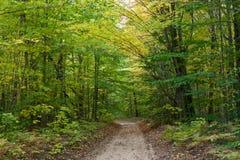De Bomen van de esdoorn en van de Beuk in de Vroege Herfst Stock Foto