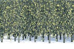 De bomen van de esp Royalty-vrije Stock Fotografie