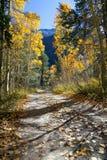 De bomen van de esp in de herfst Stock Afbeeldingen