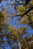 De Bomen van de hemel Stock Afbeelding