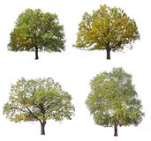 De bomen van de herfst Royalty-vrije Stock Afbeeldingen