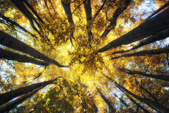 De Bomen van de herfst Royalty-vrije Stock Foto