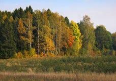 De bomen van de herfst Stock Fotografie