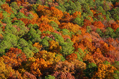 De Bomen van de herfst Stock Afbeelding