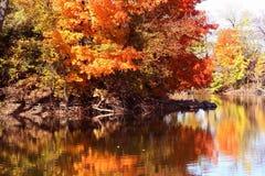 Autumn Trees royalty-vrije stock afbeeldingen