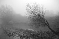 De bomen van de herfst in b&w Stock Afbeeldingen