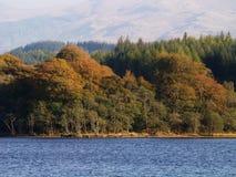 De bomen van de herfst bij de bank van een meer royalty-vrije stock foto