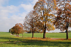 De bomen van de herfst bij de weg Stock Afbeelding