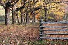 De bomen van de herfst, bladeren en gespleten spooromheining stock foto's