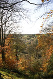 De bomen van de herfst in bos Stock Foto's