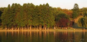 De bomen van de herfst dichtbij meer Stock Foto