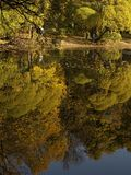 De bomen van de herfst die meer worden overdacht Royalty-vrije Stock Foto
