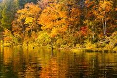 De bomen van de herfst die in meer worden weerspiegeld Stock Afbeeldingen