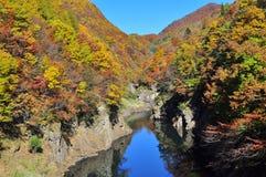 De bomen van de herfst die in Rivier Tonegawa worden weerspiegeld Royalty-vrije Stock Afbeeldingen