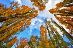 De Bomen van de herfst onder Blauwe Hemel royalty-vrije stock foto