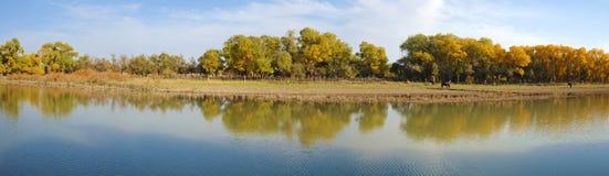De bomen van de herfst op de bank royalty-vrije stock foto