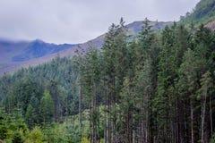 De bomen van de hooglandpijnboom royalty-vrije stock afbeelding