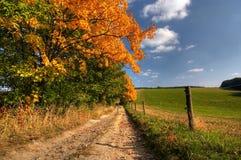 De bomen van de landweg en van de herfst Stock Foto's