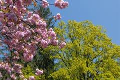 De bomen van de lente Royalty-vrije Stock Afbeelding
