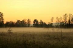 De bomen van de ochtendmening Royalty-vrije Stock Foto