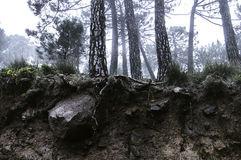 De Bomen van de ondergrondsmist Royalty-vrije Stock Foto