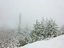 De bomen van de pijnboom in de winter stock fotografie