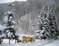 De bomen van de pijnboom in de winter royalty-vrije stock afbeelding
