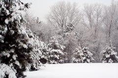 De Bomen van de pijnboom in de Wintertijd. Royalty-vrije Stock Foto's