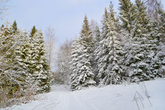 De bomen van de pijnboom die door sneeuw worden behandeld Royalty-vrije Stock Foto