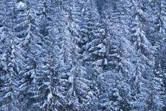 De bomen van de pijnboom die met sneeuw worden geladen Royalty-vrije Stock Afbeeldingen