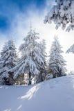 De Bomen van de pijnboom die in Sneeuw worden behandeld stock afbeeldingen