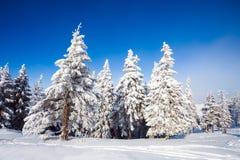 De Bomen van de pijnboom die in Sneeuw worden behandeld royalty-vrije stock foto