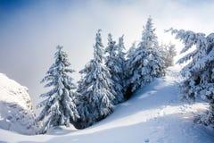 De Bomen van de pijnboom die in Sneeuw worden behandeld stock foto's