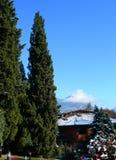 De bomen van de pijnboom tegen duidelijke blauwe hemel en bergen in Zwitserland Stock Afbeeldingen