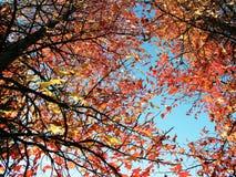 De Bomen van de regen Stock Afbeelding