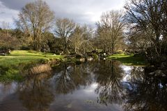 De bomen van de rivier Royalty-vrije Stock Foto's