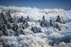 De bomen van de sneeuw in de winter Royalty-vrije Stock Foto