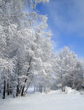 De bomen van de sneeuw en de blauwe hemel royalty-vrije stock afbeeldingen