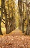 De bomen van de wegkant royalty-vrije stock fotografie