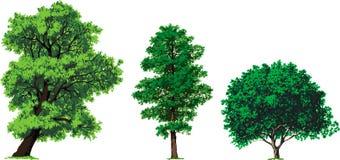De bomen van de wilg, van de els en van de okkernoot. Vector Stock Foto's