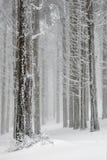 De bomen van de winter Stock Afbeelding