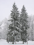 De bomen van de winter stock foto's